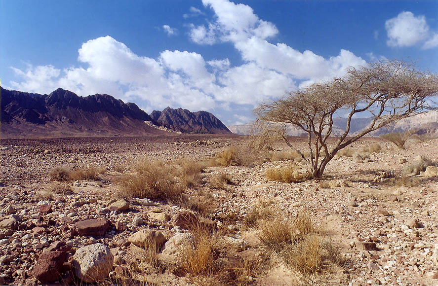 Timna Valley, 13 miles north from Eilat. The Middle East