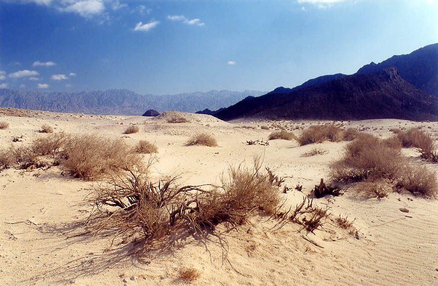 A small sandy area in western Timna Park, with...north from Eilat. The Middle East