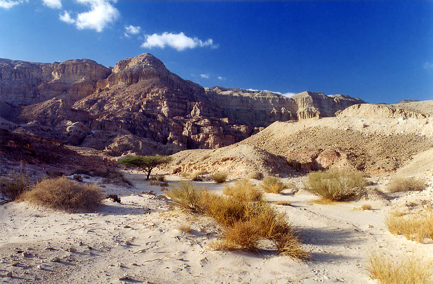 A small wadi at foot of Timna Cliffs in western...north from Eilat. The Middle East