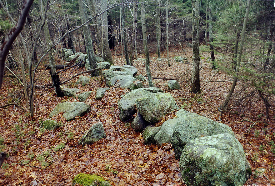 Abandoned stone wall in a forest from Tattapanum...east from Fall River. Massachusetts