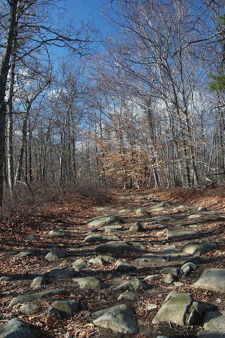 Mowry Path in Freetown Fall River State Forest. Massachusetts