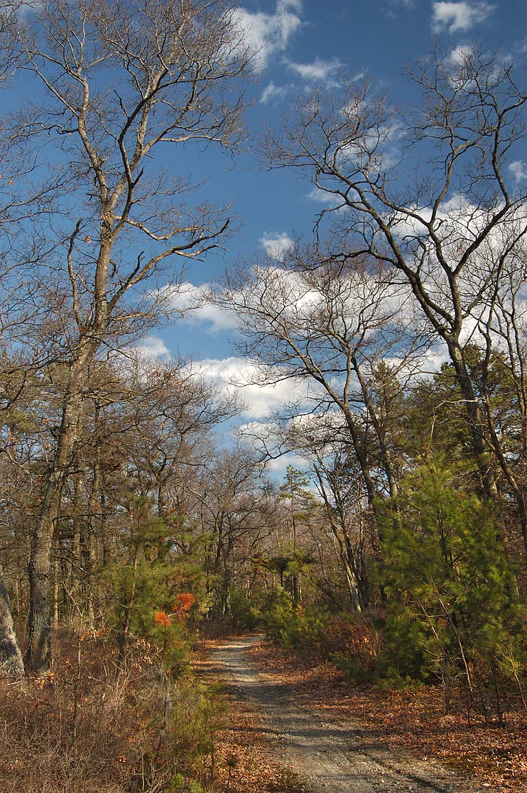 A trail from a corner of Ledge Rd. and Wampanoag...Fall River State Forest. Massachusetts