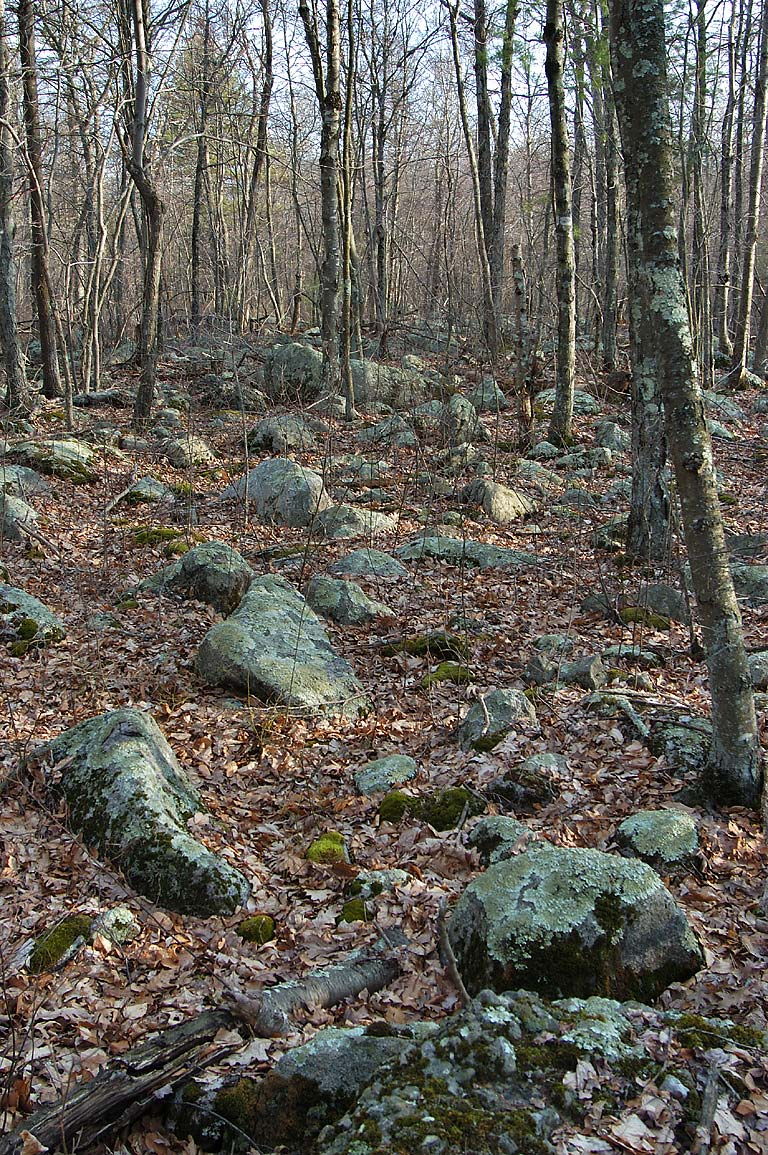 From a trail near Hogs Rock in Freetown/Fall River State Forest. Massachusetts