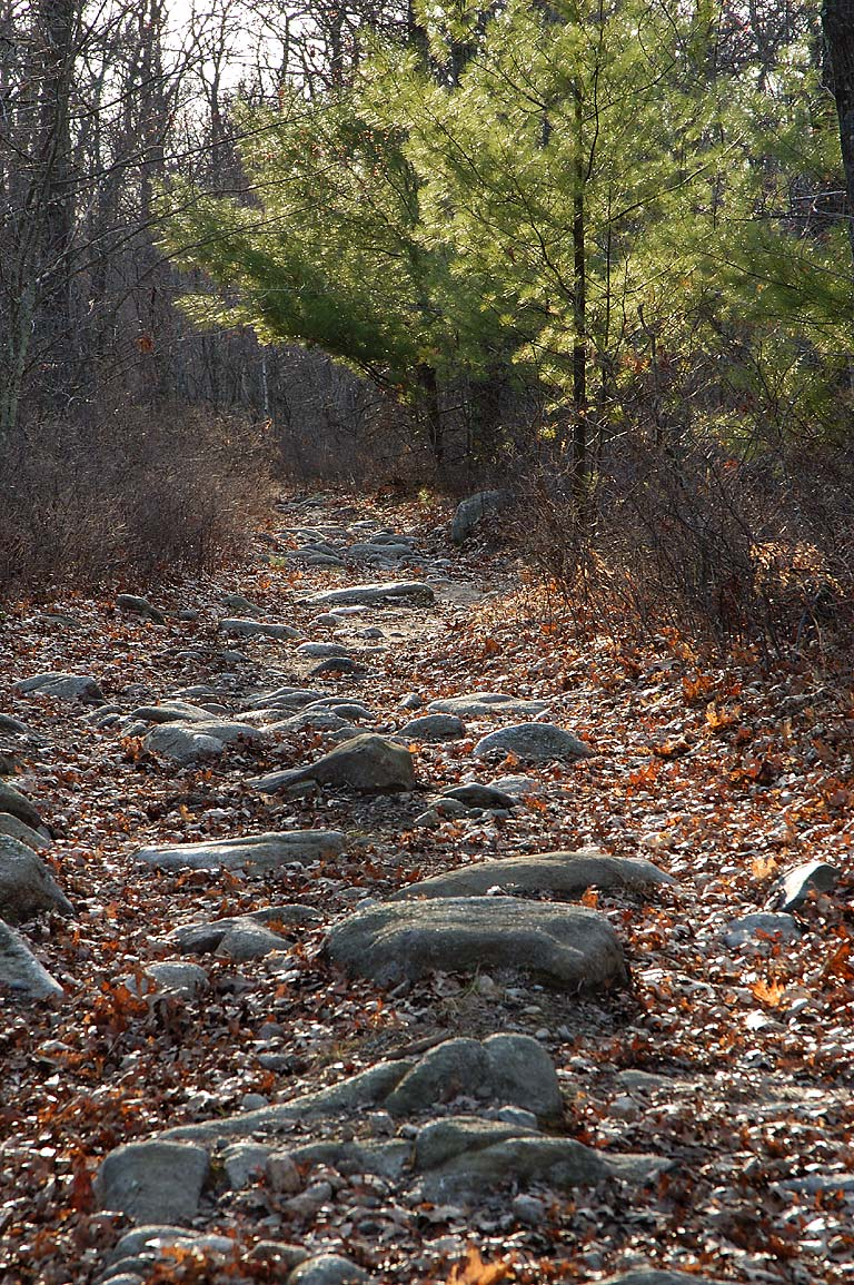 Hogs Rock Path in Freetown/Fall River State Forest. Massachusetts