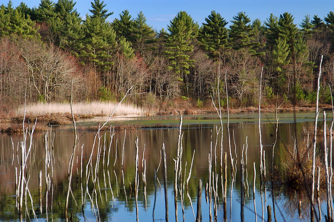 Doctor's Mill Pond in Freetown/Fall River State Forest. Massachusetts