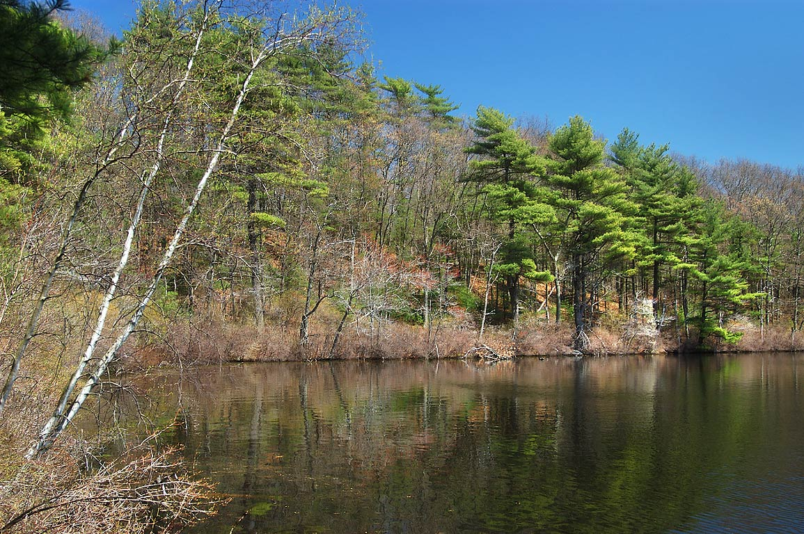 Big Bearhole Pond in Massasoit State Park. East Taunton, Massachusetts
