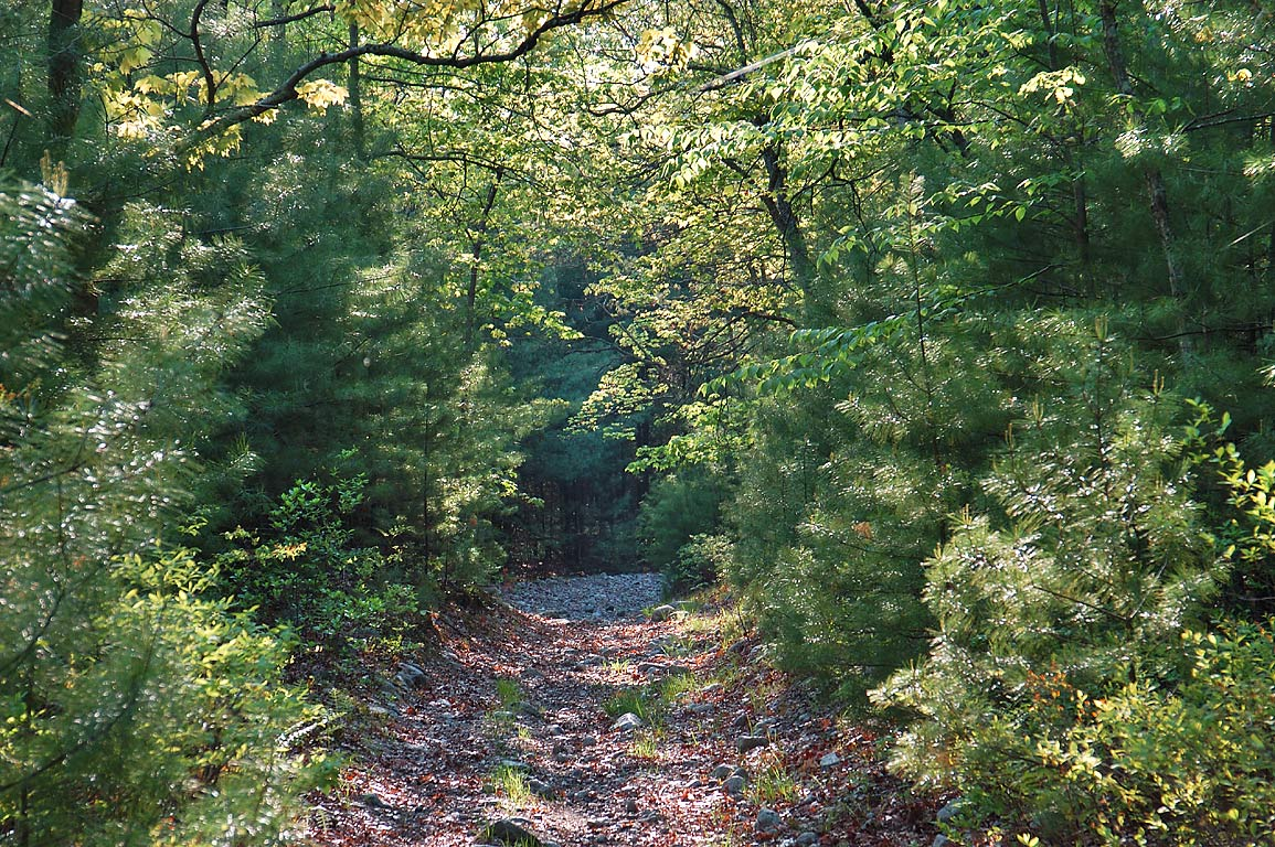 Whitetail Loop trail in Freetown/Fall River State Forest. Massachusetts
