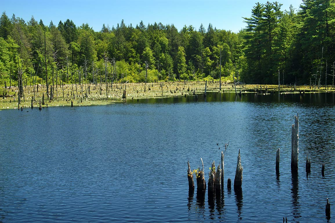 A pond near Morse Loop Trail on northern border of Borderland State Park. Massachusetts