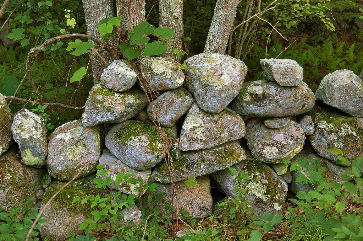 Abandoned stone wall near Doctor's Mill Pond in...Fall River State Forest. Massachusetts
