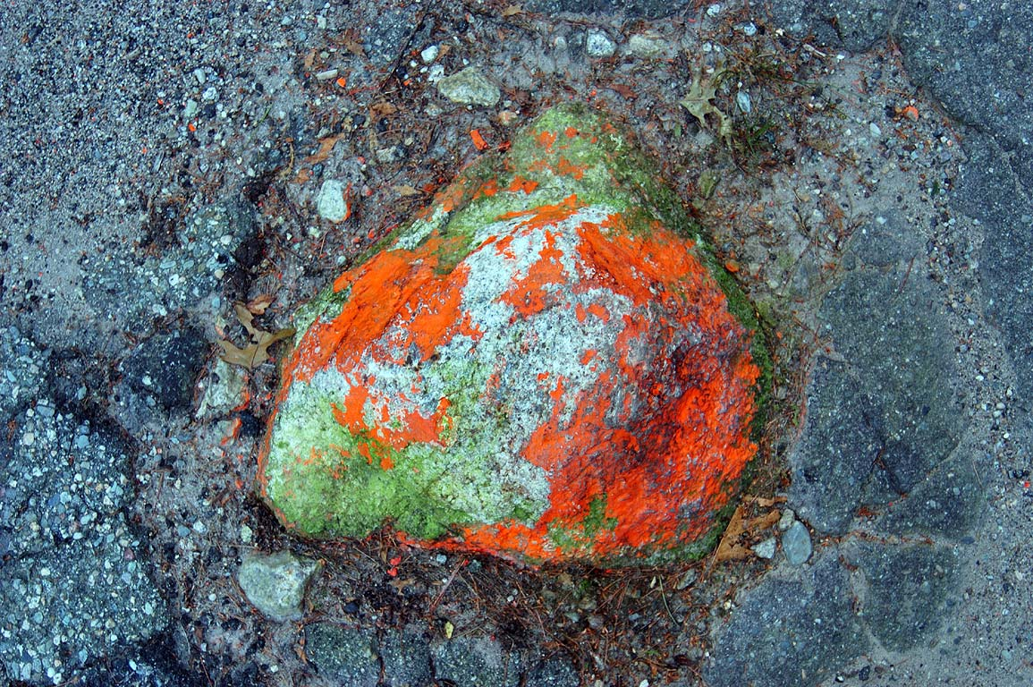 A rock in the middle of Bell Rock Rd. in Freetown-Fall River State Forest. Massachusetts