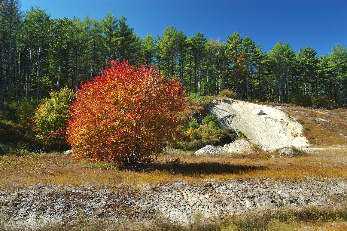 A shore of a cranberry marsh near Rocky Pond in Myles Standish State Forest. Massachusetts