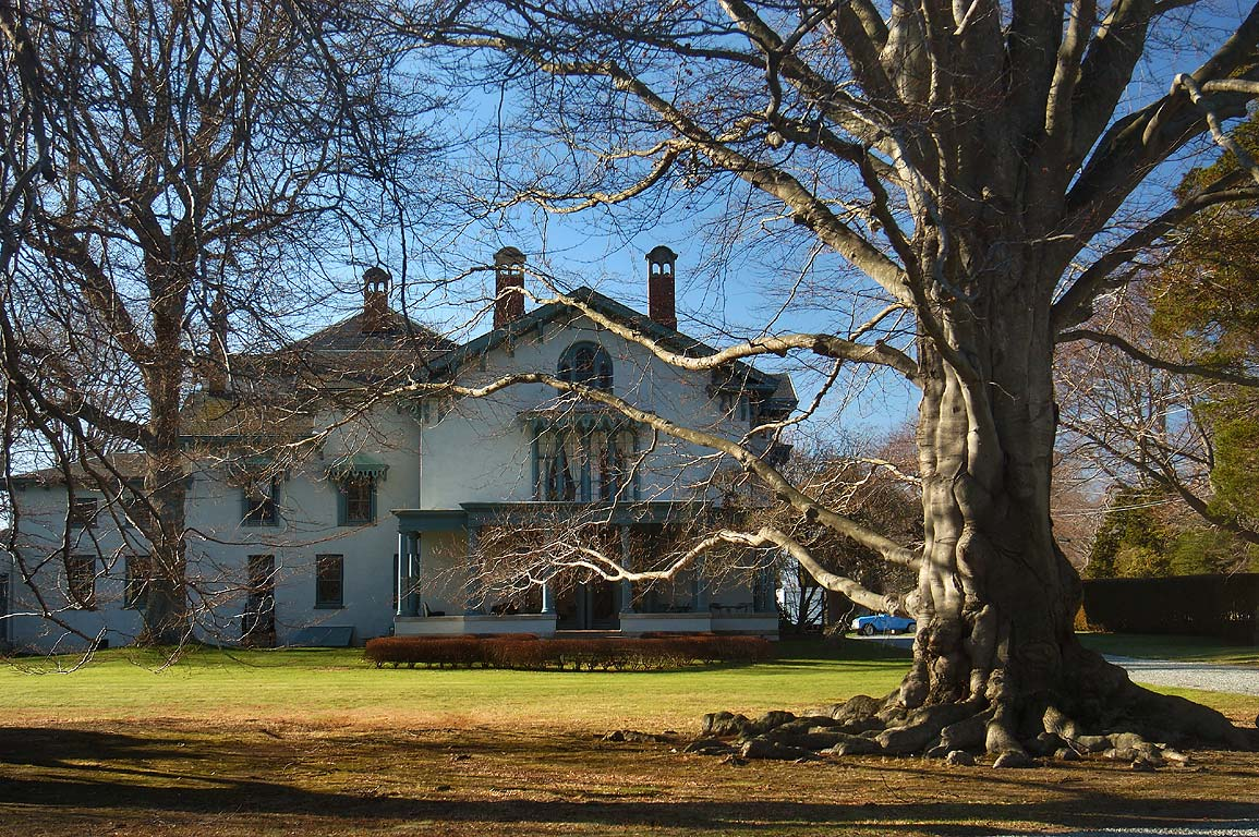 A copper beech tree and Swanhurst Manor House at Bellevue Ave. in Newport. Rhode Island