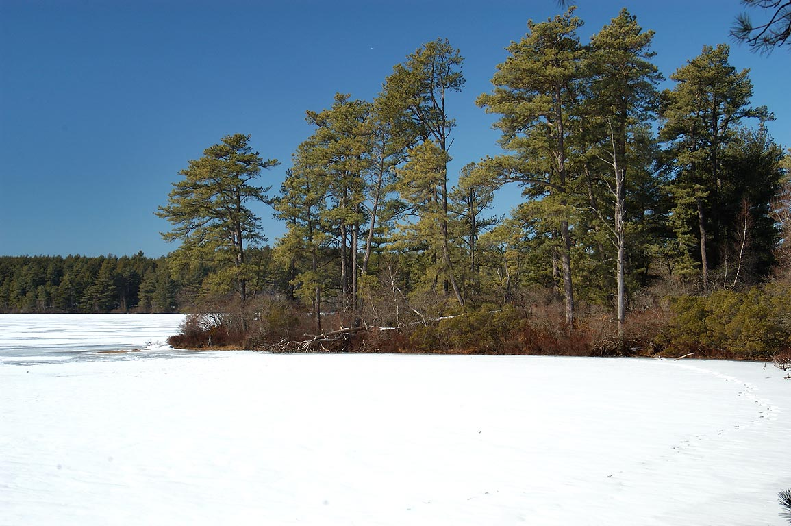 East Head Reservoir in Myles Standish State Forest. Massachusetts