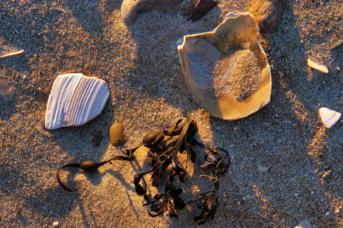 Marine castoffs on Horseneck Beach at sunset. Westport, Massachusetts
