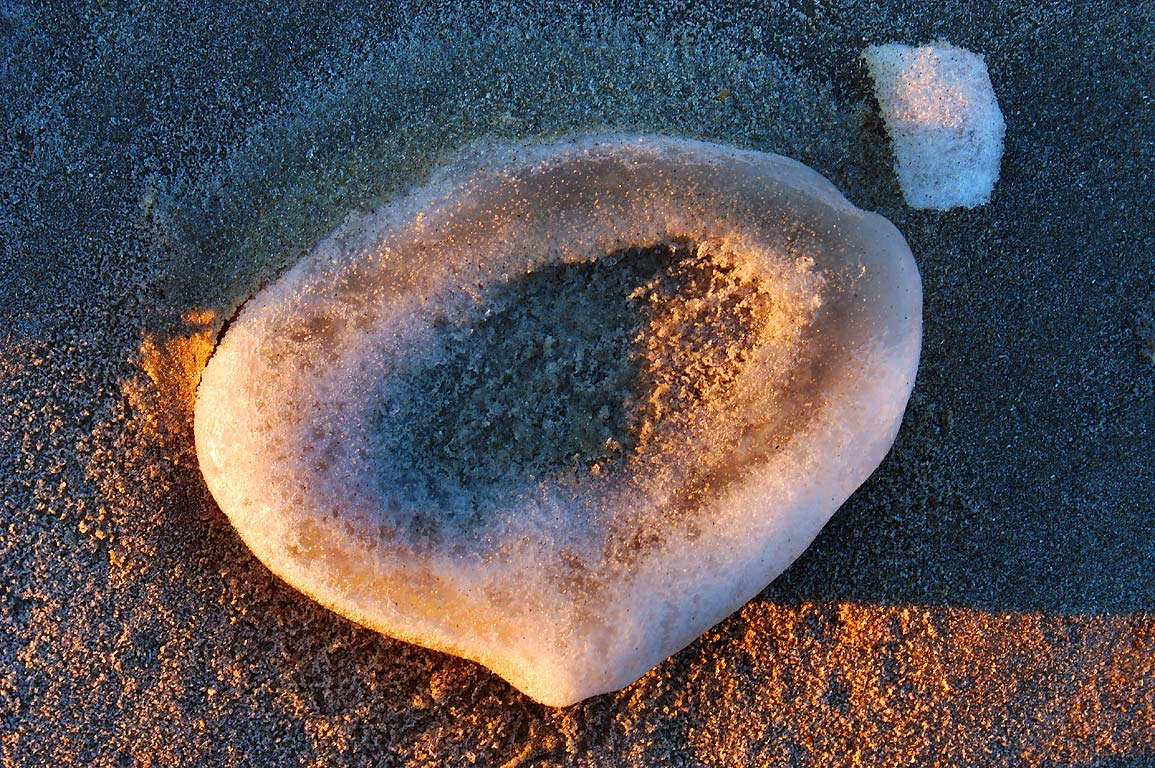 Icy quahog shell on Horseneck Beach at sunset. Westport, Massachusetts