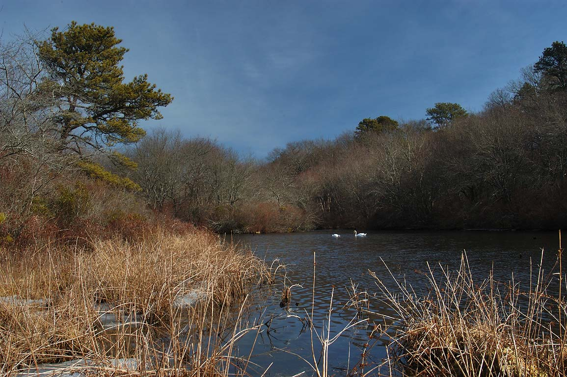 Upper Pond of Four Ponds Conservation Area in Cape Cod. Bourne, Massachusetts