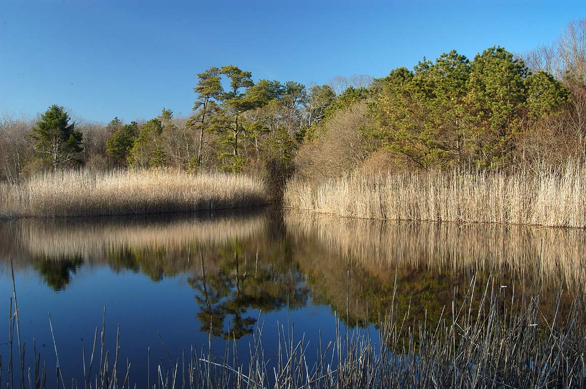 A small pond in Simmons Mill Pond Management Area. Adamsville, Rhode Island