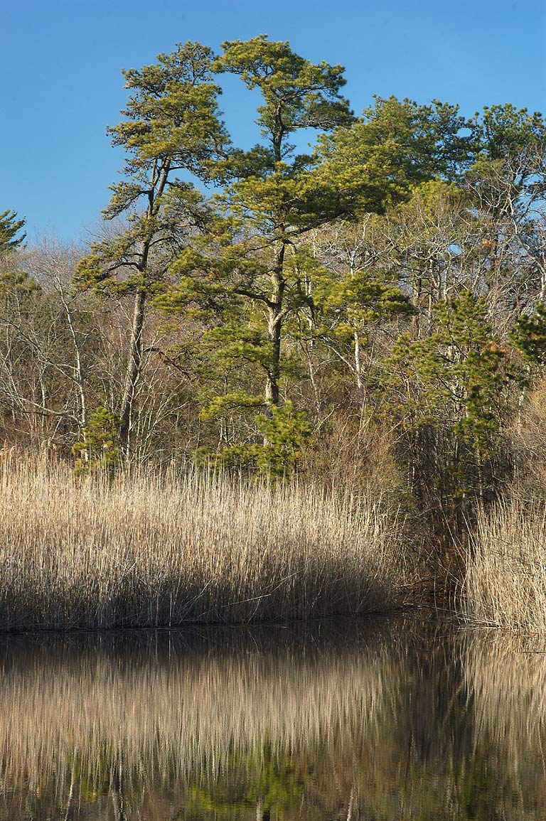 Simmons Mill Pond Management Area. Adamsville, Rhode Island