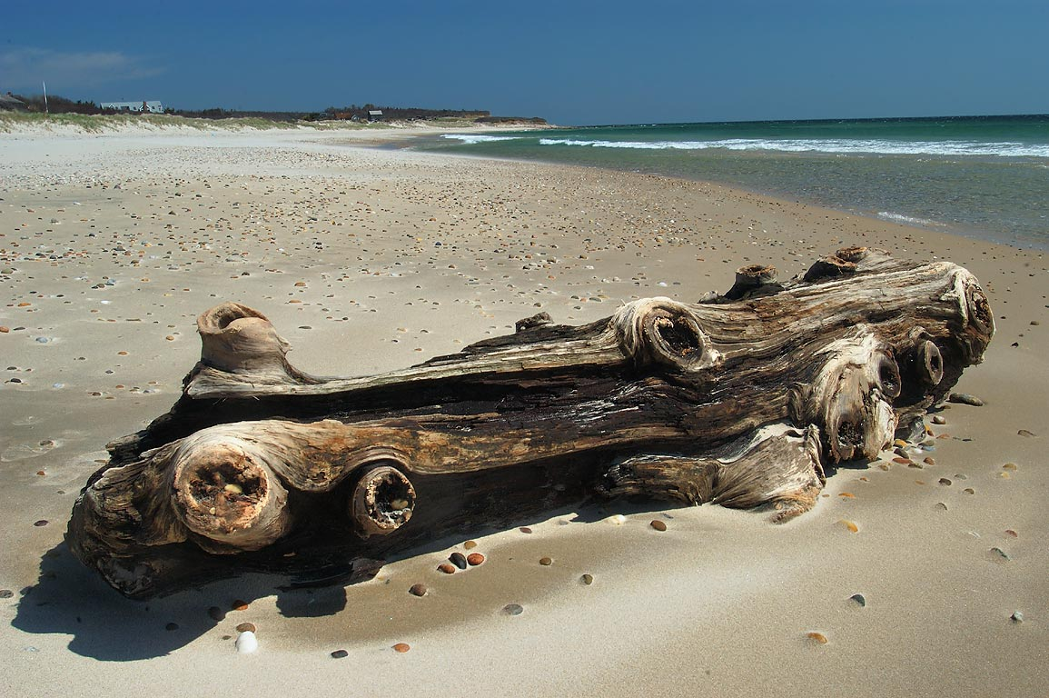 Driftwood on Mansion Beach in Block Island. New Shoreham, Rhode Island