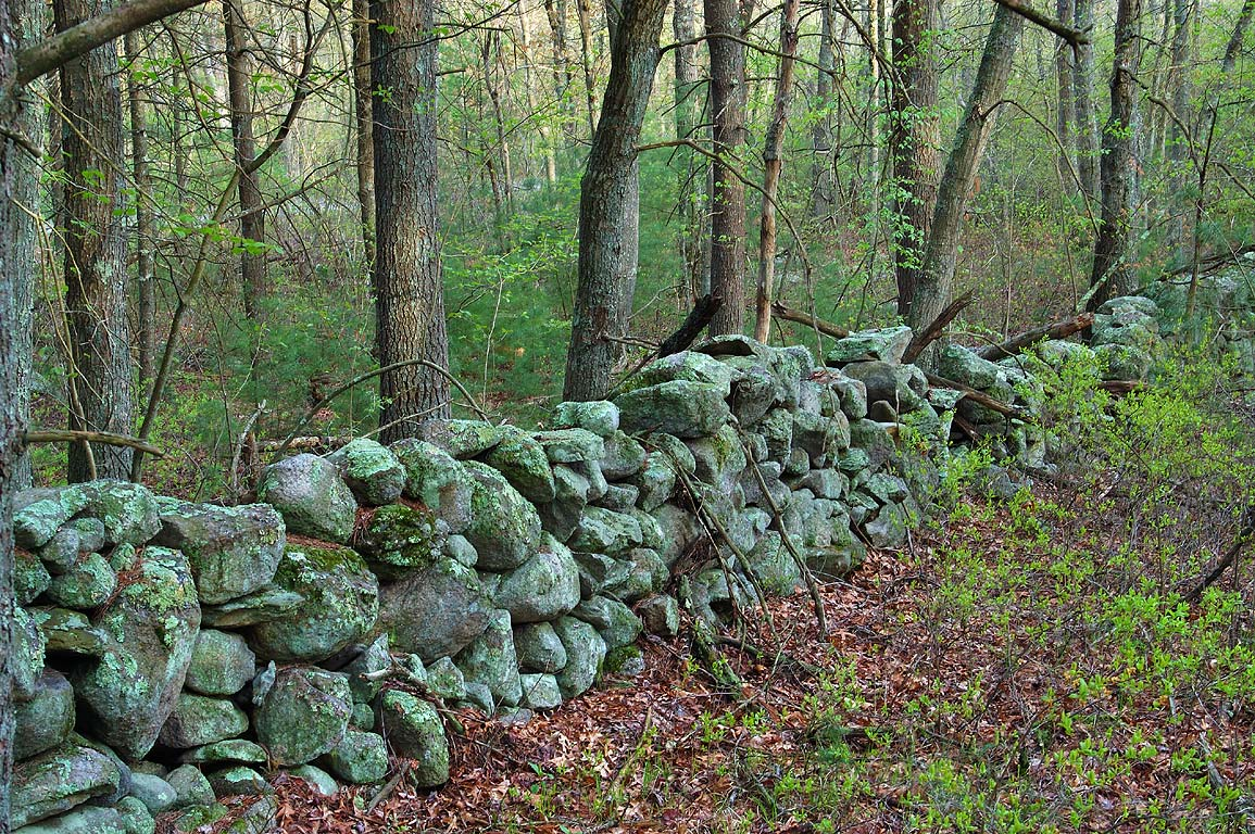 Abandoned stone wall in Freetown/Fall River State...near Bell Rock Rd.. Massachusetts