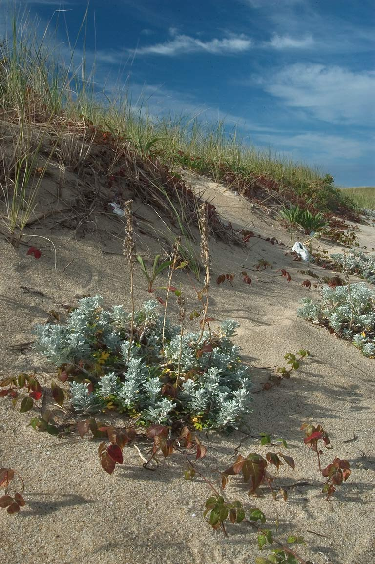 Grasses on Long Point Beach in Cape Cod. Provincetown, Massachusetts