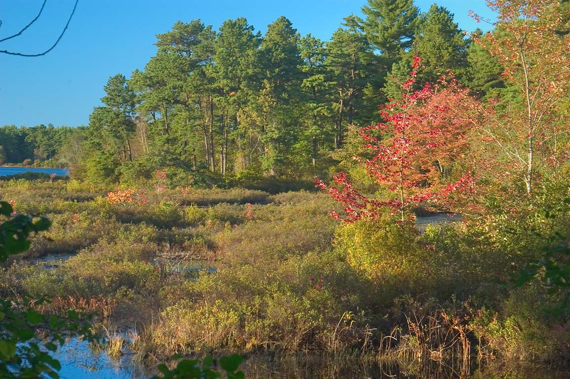 South side of East Head Reservoir in Myles Standish State Forest at evening. Massachusetts
