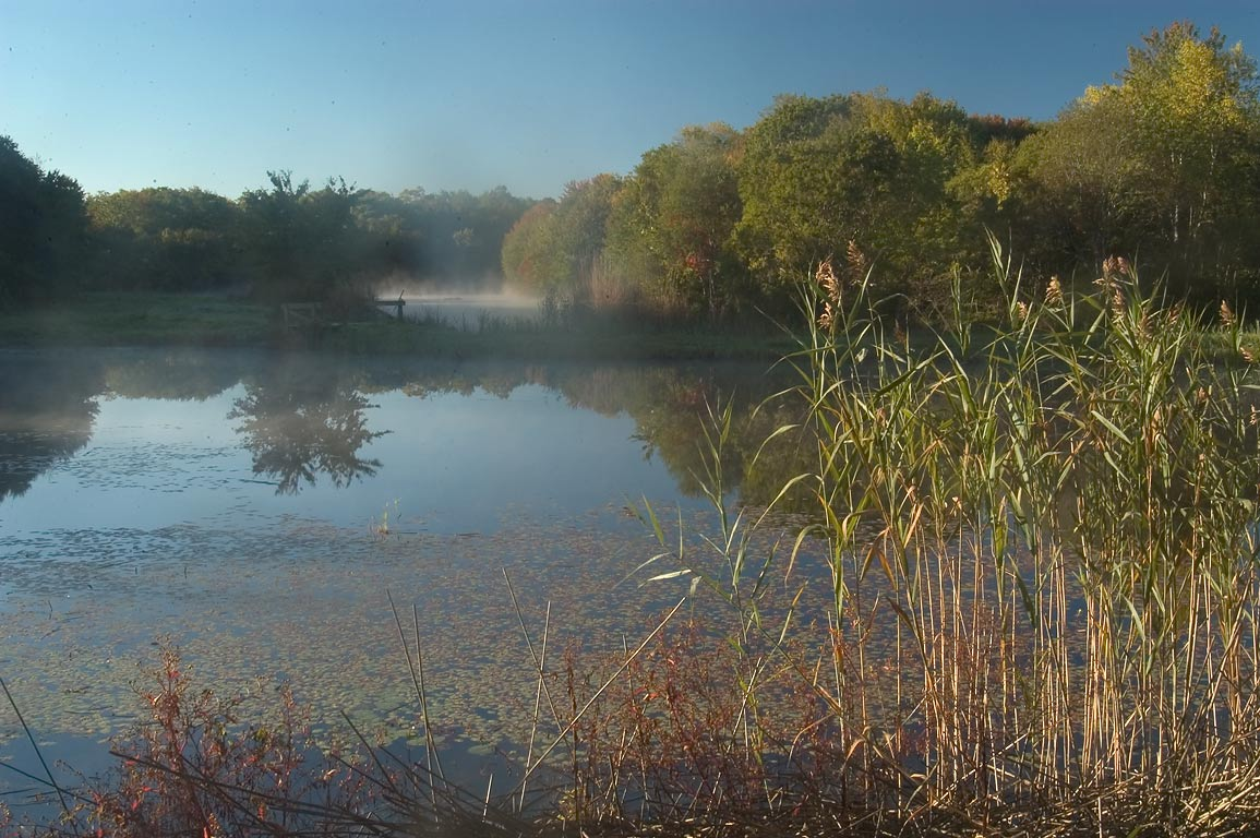 Two ponds in Simmons Mill Pond Management Area...mist. Little Compton, Rhode Island