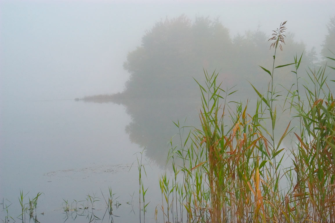 An island of Turner Pond near High Hill Rd. in fog. Dartmouth, Massachusetts