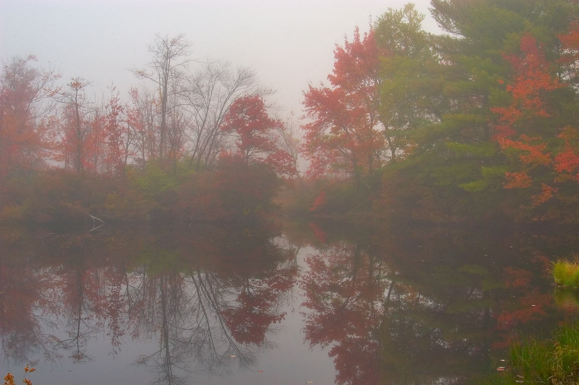 A holding pond of Perry Bogs in Massasoit State Park, in fog. East Taunton, Massachusetts