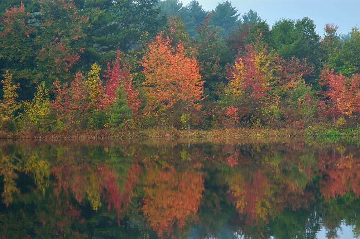 Fall colors of Little Bearhole Pond in Massasoit...in fog. East Taunton, Massachusetts
