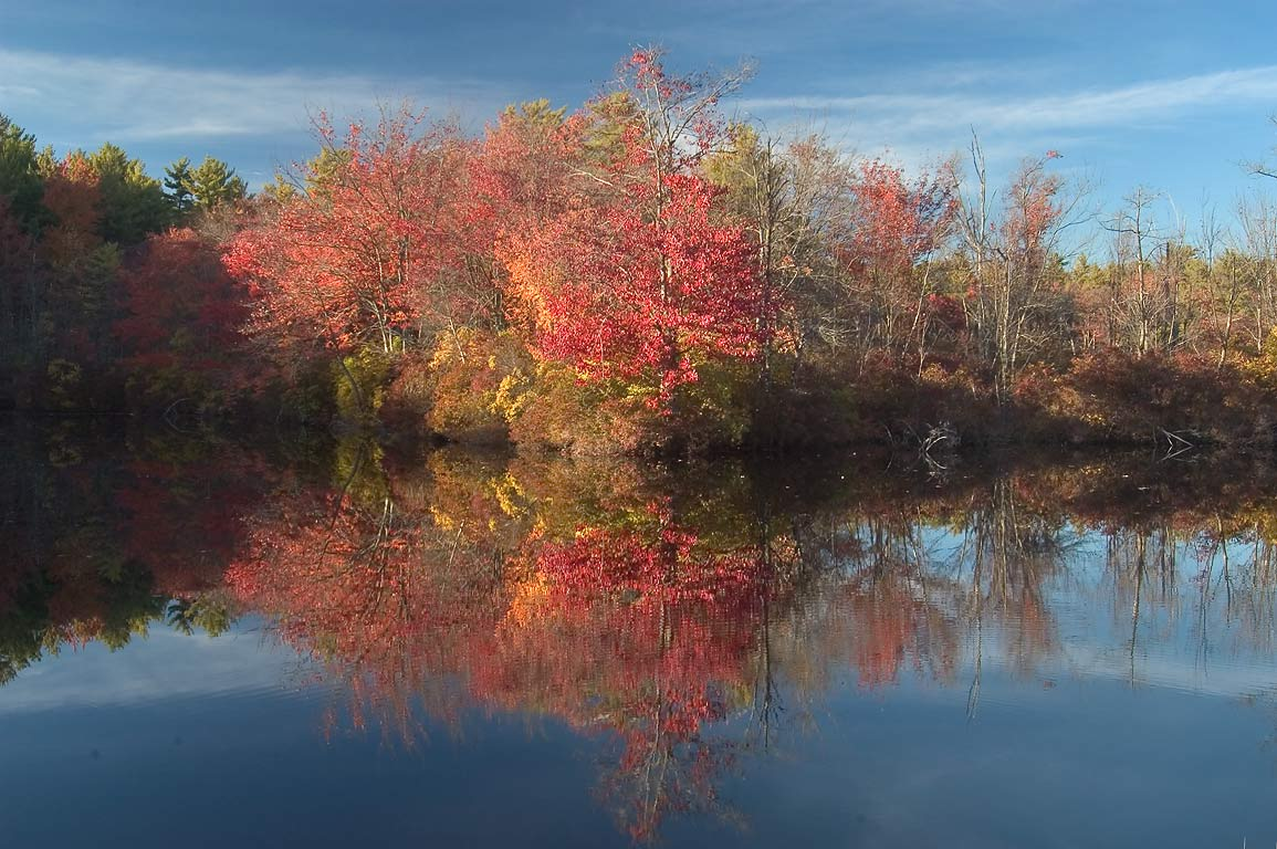 A holding pond of Perry Bogs in Massasoit State Park. East Taunton, Massachusetts