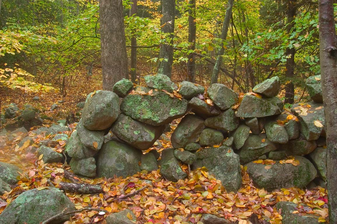Abandoned stone wall in a forest near Tattapanum...in northern Fall River. Massachusetts