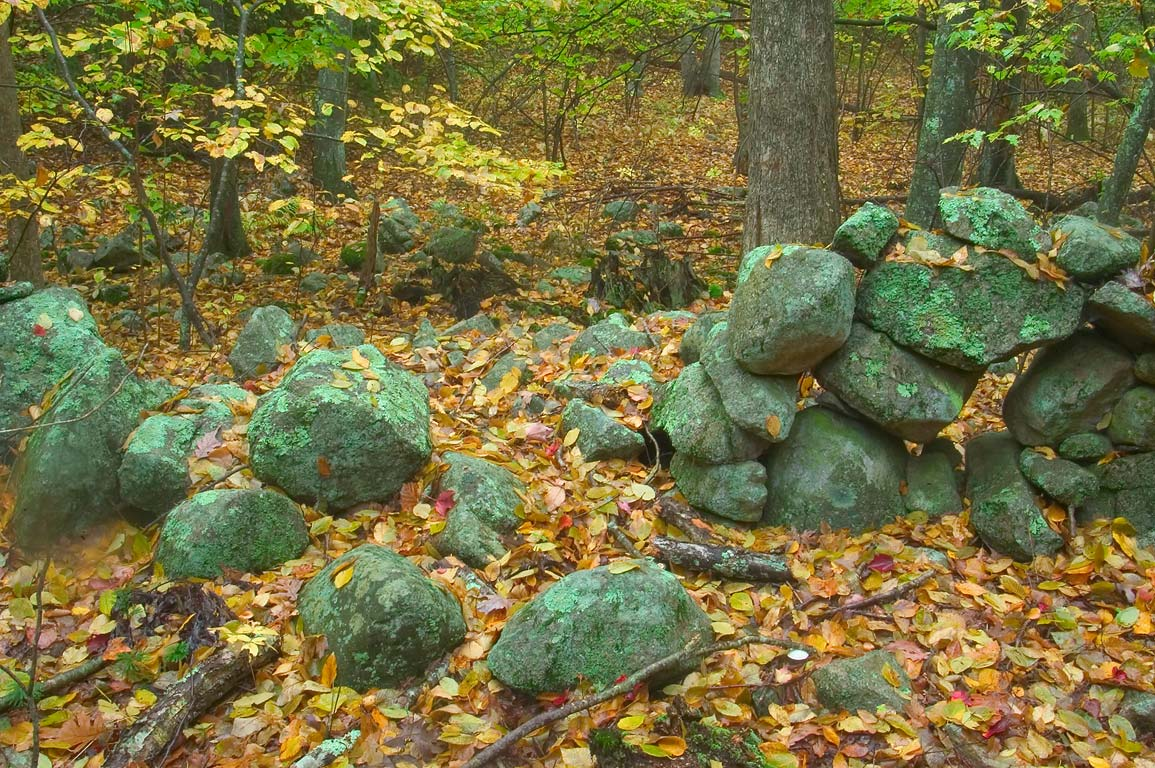 A breach in an abandoned stone wall in a forest...in northern Fall River. Massachusetts