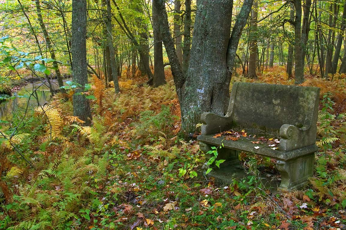 A bench overlooking Dundery Brook in Wilbour Woods park. Little Compton, Rhode Island