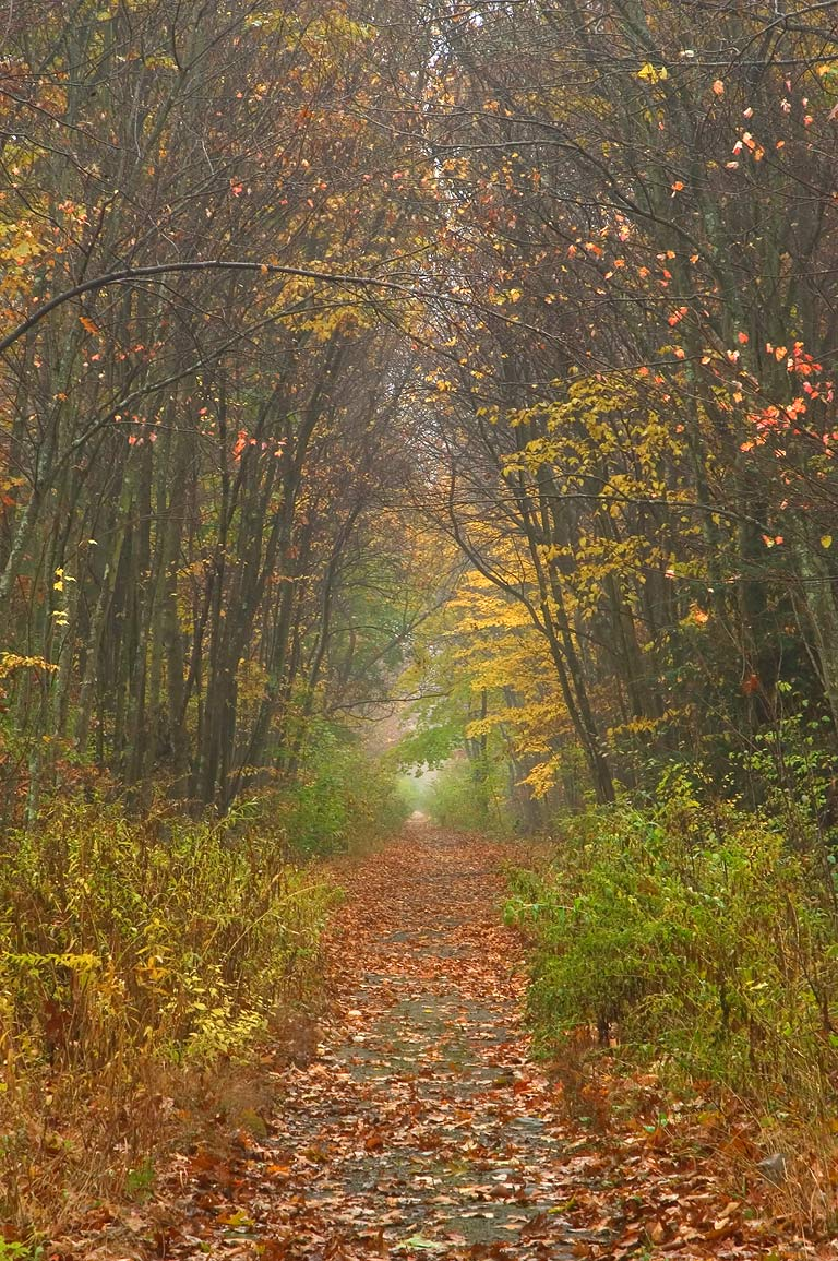 SNET Trail in fog near Millville Lock in...State Park. Uxbridge, Massachusetts