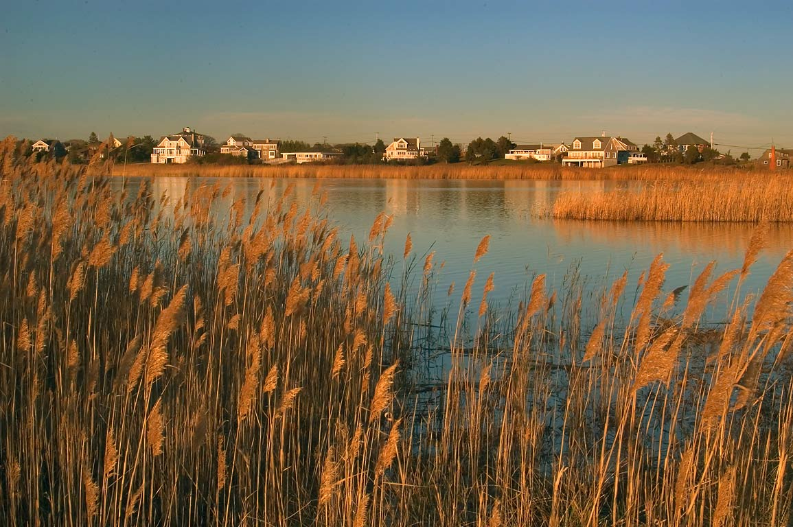 Reeds and Richmond Pond west from Acoaxet at evening. Westport, Massachusetts
