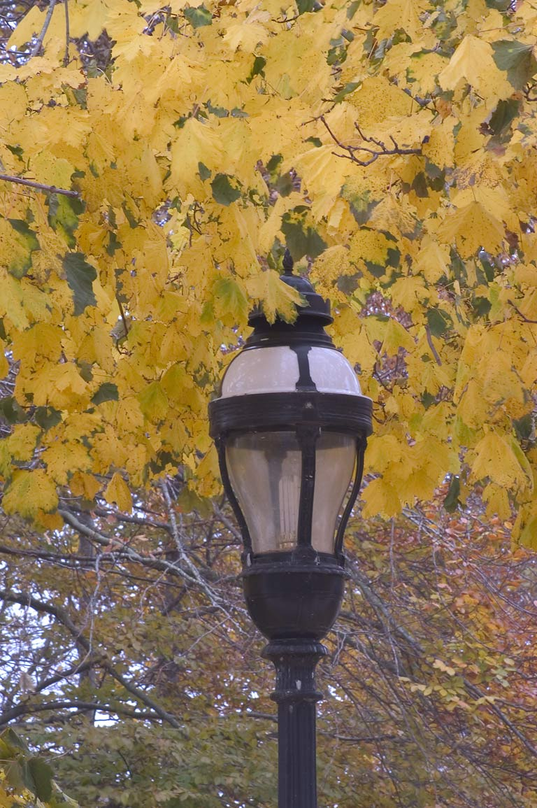 A lamppost on Bellevue Ave.. Newport, Rhode Island