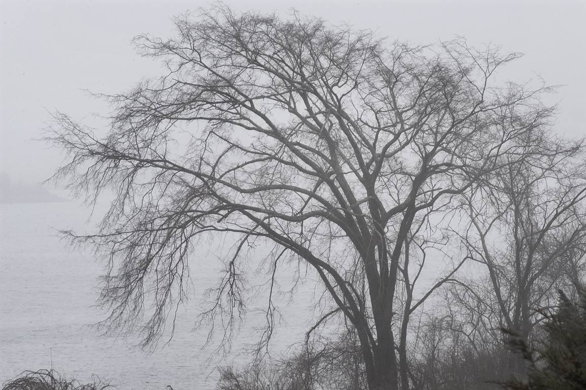 A tree in fog near Slocums River, view from...Reserve. Dartmouth, Massachusetts