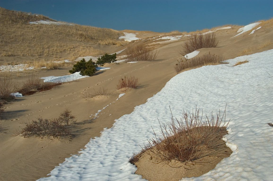 Dunes near Snail Trail in Cape Cod. Provincetown, Massachusetts