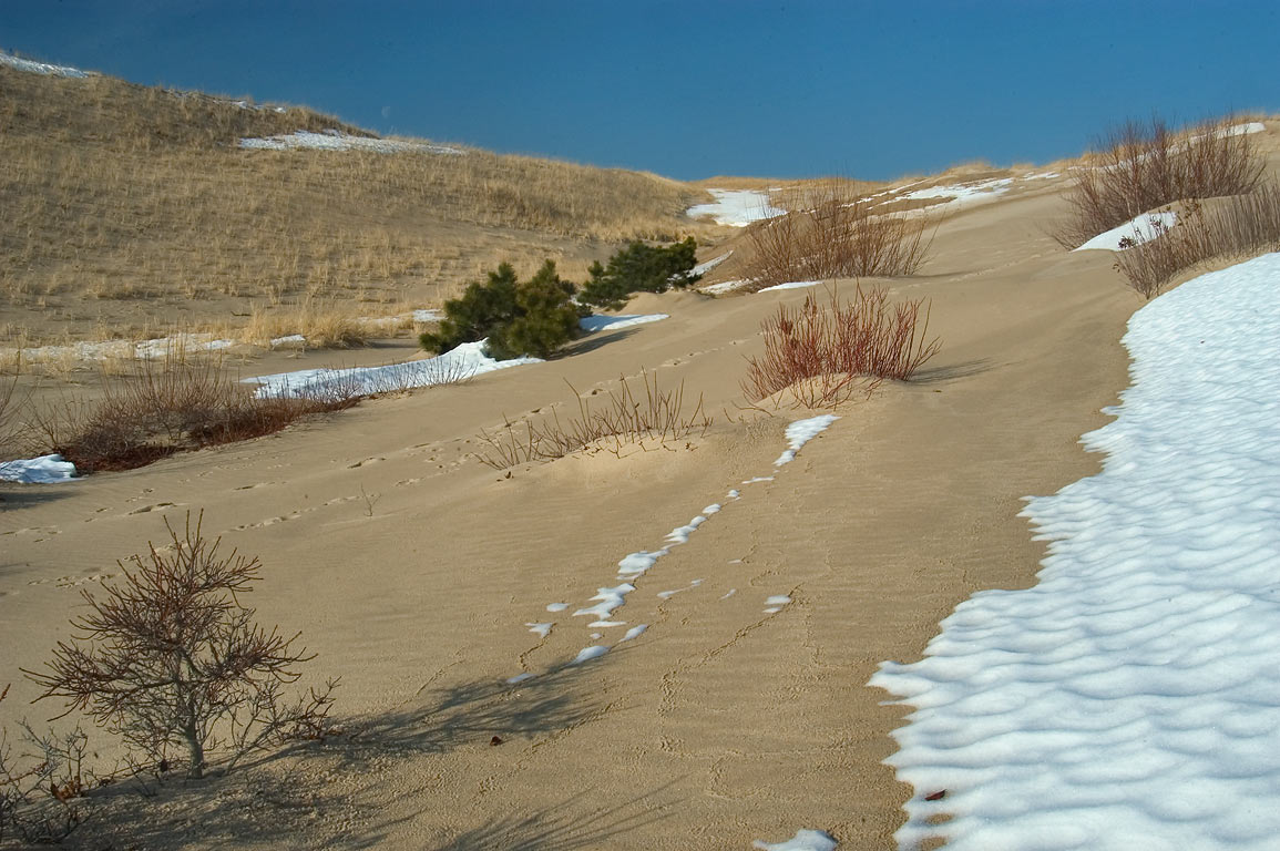 Dunes and melting snow near Snail Trail in Cape Cod. Provincetown, Massachusetts
