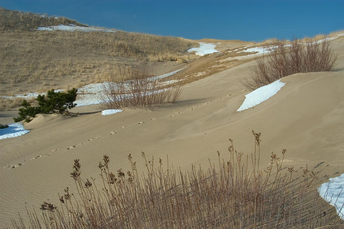 Dunes, bushes and melting snow near Snail Trail in Cape Cod. Provincetown, Massachusetts