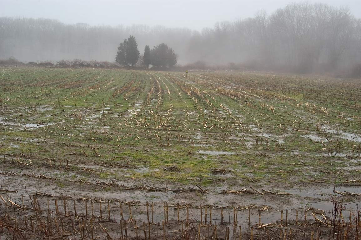 A corn field during thaw, view from Cornell Rd.. Westport, Massachusetts