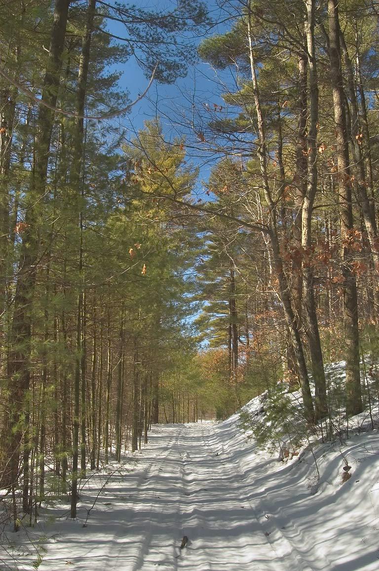photo 43612 ski tracks in massasoit state park near