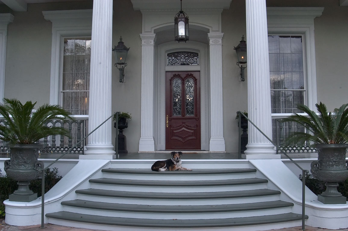 A dog guarding Robinson-Jordan House in Garden District. New Orleans, Louisiana