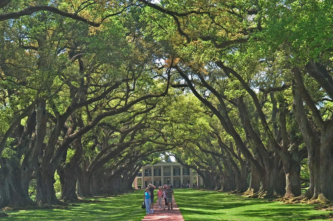 An oak alley, view from a gate, in Oak Alley Plantation. West from New Orleans, Louisiana