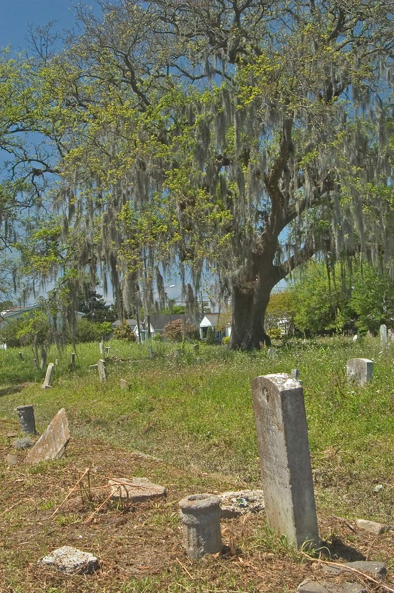 An oak with spanish moss in Holt Cemetery. New Orleans, Louisiana