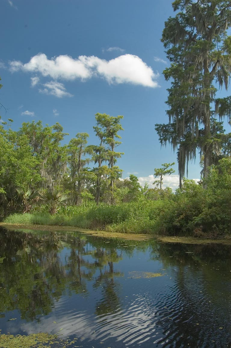 Kenta Canal in Barataria Preserve, view from Marsh Overlook Trail. New Orleans, Louisiana