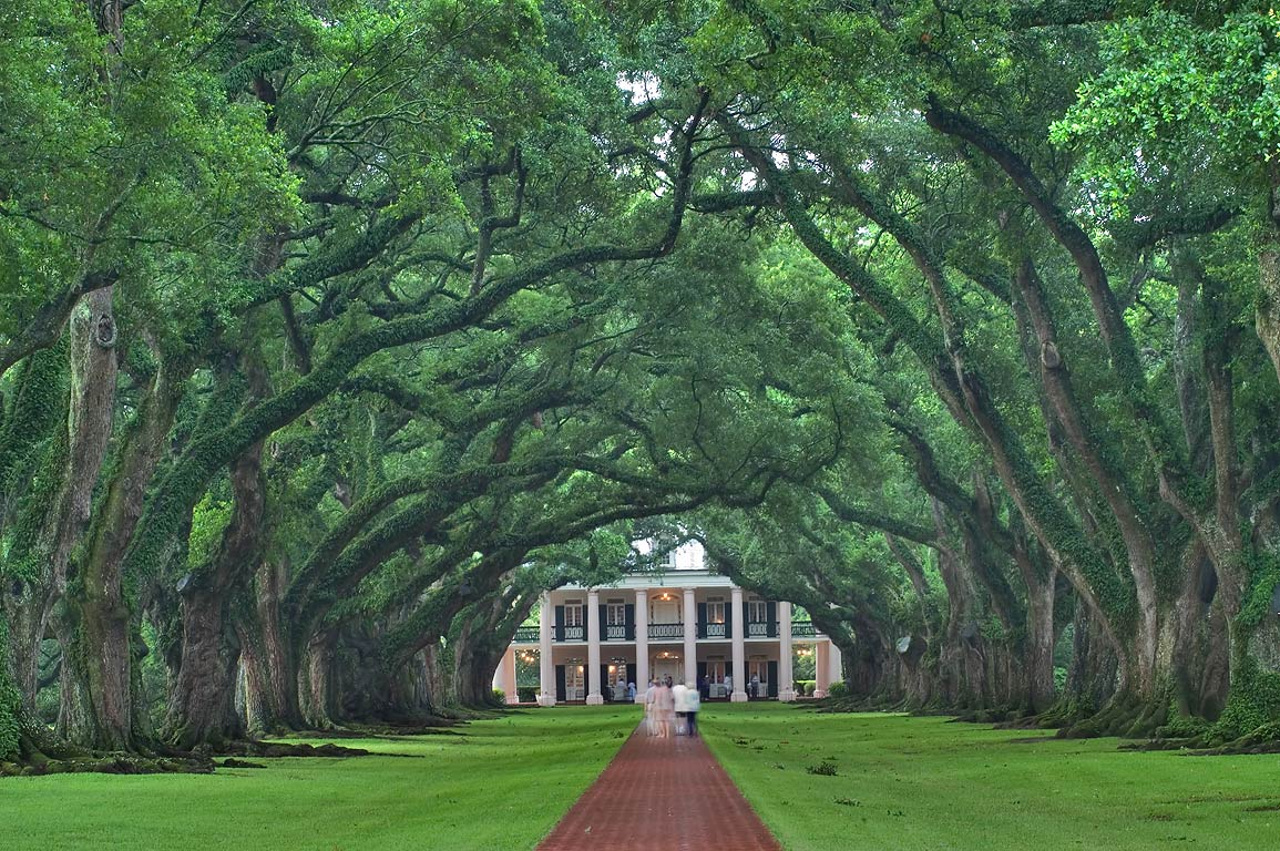 The alley of Oak Alley Plantation, view from the gate. Vacherie, Louisiana