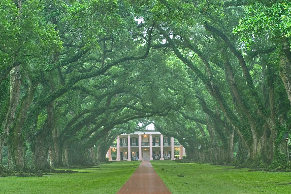 The alley of Oak Alley Plantation, view from the gate, at rain. Vacherie, Louisiana