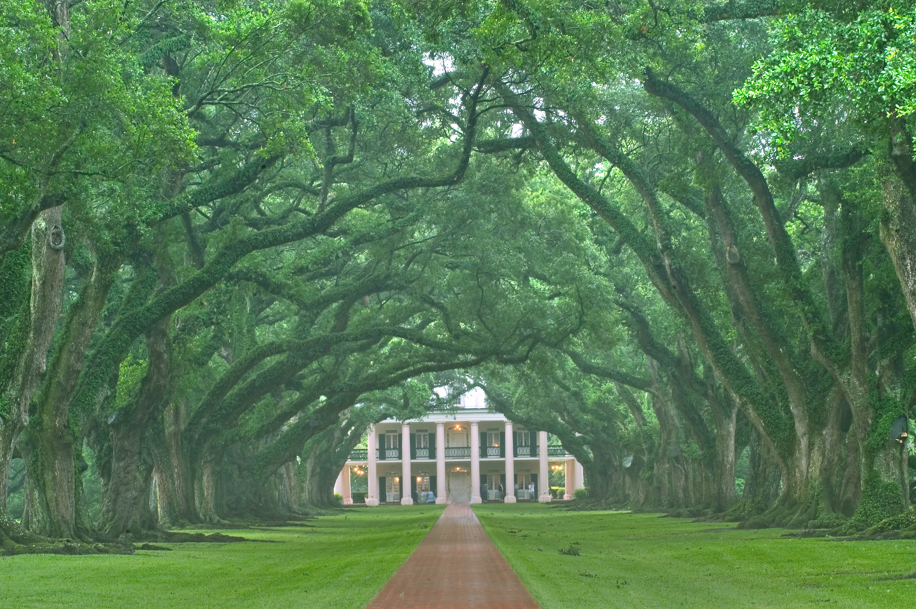 Photo 453-24: The alley of Oak Alley Plantation, view from ...